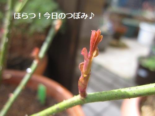 054-2_20120316190725.jpg