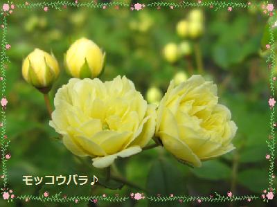 今年の開花第一号♪