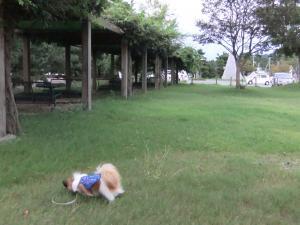 芝生くんくん