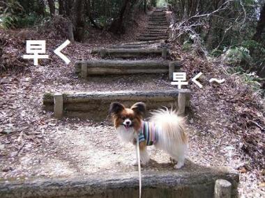 階段早く~
