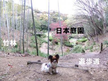 日本庭園の上には