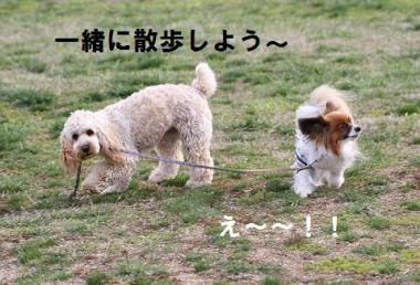 散歩しよう