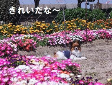 お花きれい