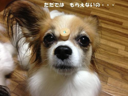 ぱぴぱぴ3