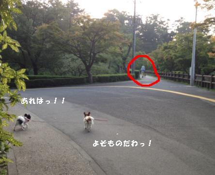 okazaki8.jpg