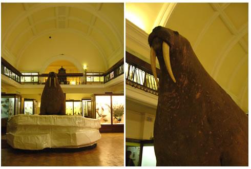 ホーニマン博物館の剥製の部屋