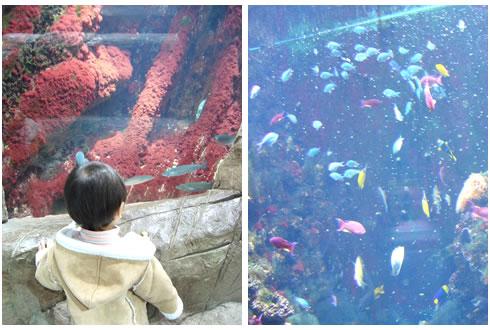 水族館&お魚