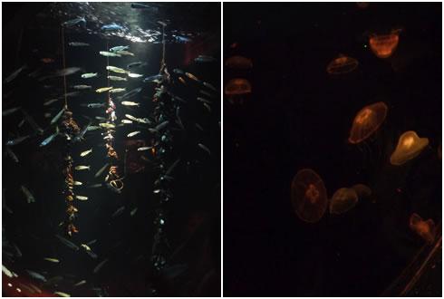 小さな魚&クラゲ
