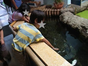 魚に触る息子