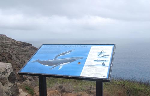 クジラが見えるポイント