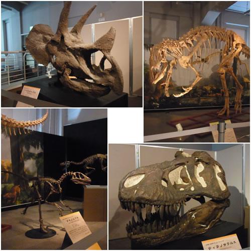 恐竜の化石骨格標本