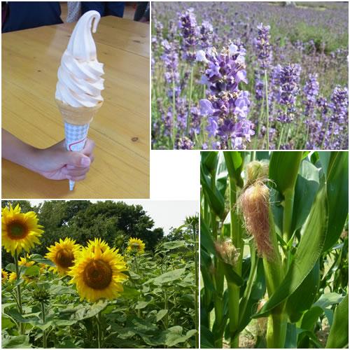 ソフトクリーム&畑