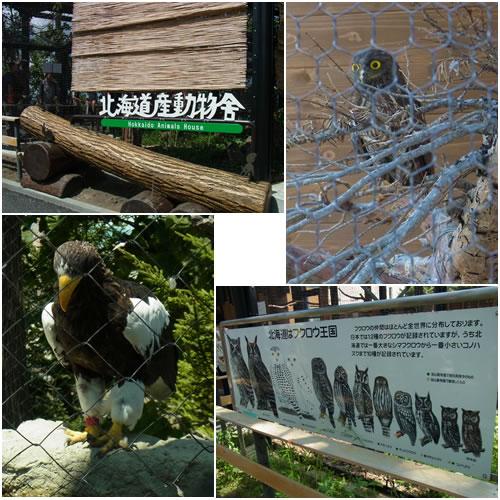 北海道産動物舎