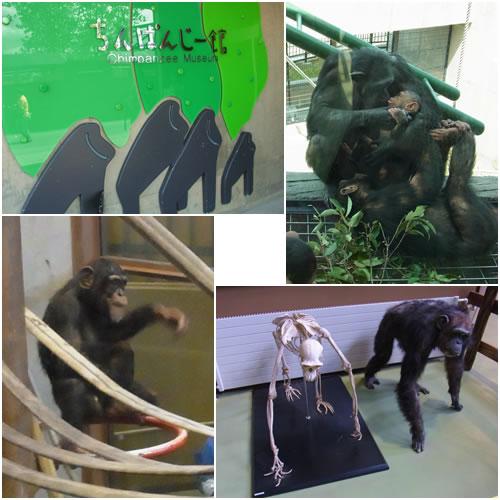 チンパンジーの森ちんぱんじー館