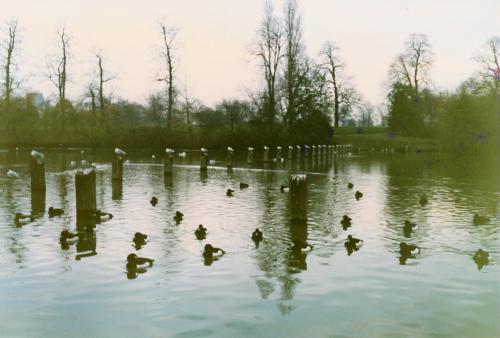 ケンジントンの池