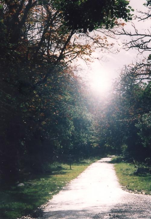 煌めきの遊歩道