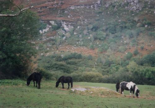 キラーニの馬
