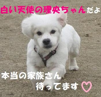 理央ちゃんhurima2