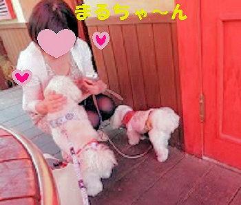 S_P1010974M.jpg