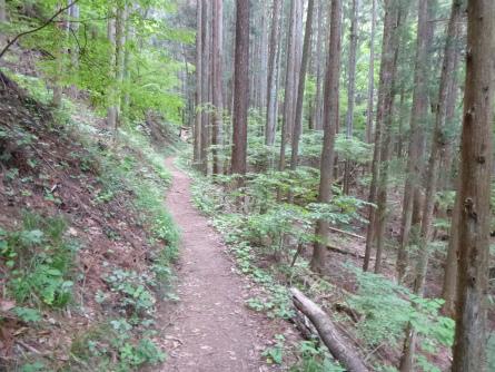 009樹林帯