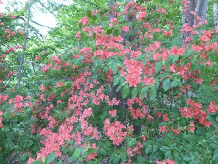 014赤い花