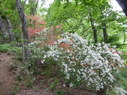 017白い花