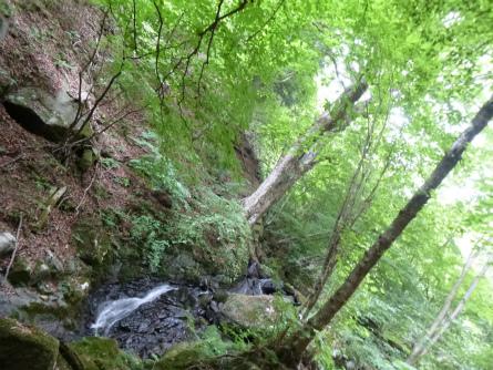 024巨木と川