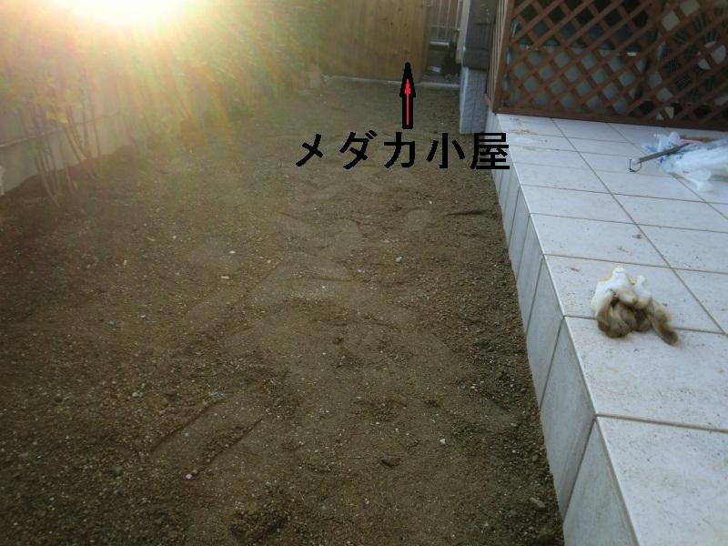 DPP_130004421.jpg