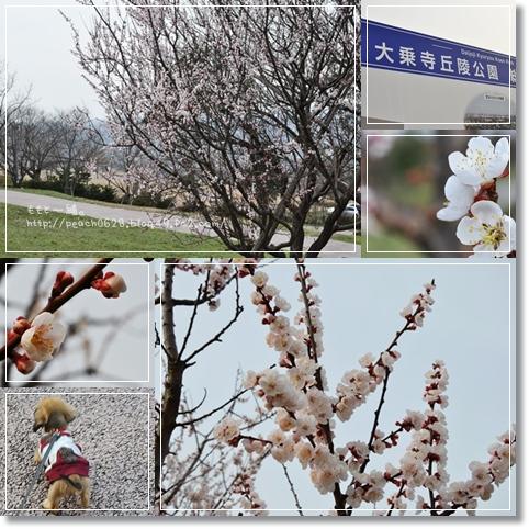 大乗寺丘陵公園6-1