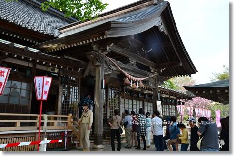 倶利伽羅八重桜まつり2013 013