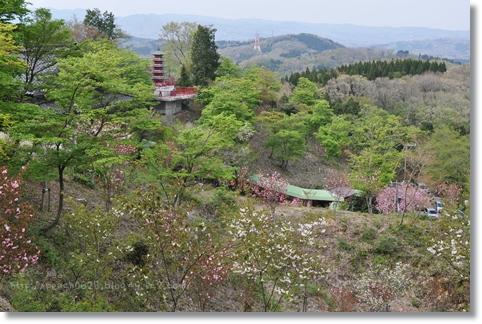 倶利伽羅八重桜まつり2013 171