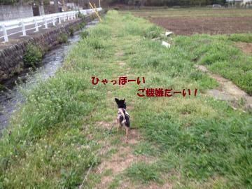 IMG_3688_convert_20130406152949.jpg