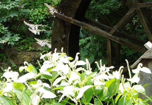 高蔵寺 夏 新盆