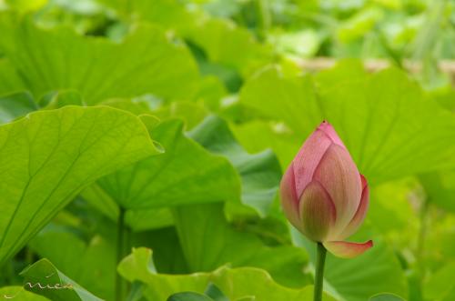瞑想_convert_20130803231142