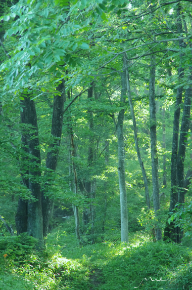森の生活_convert_20130820120908