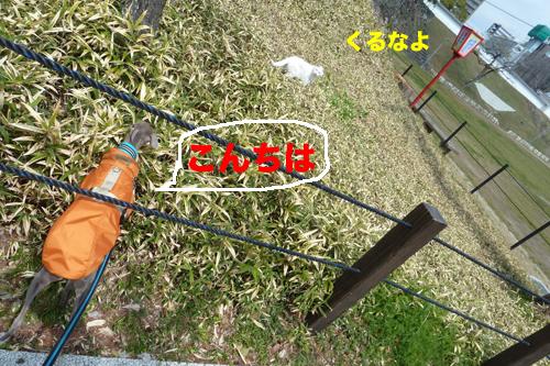 4-7-2_20120407161206.jpg