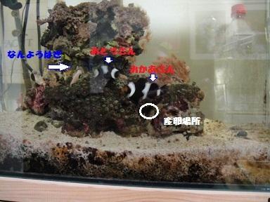 20120413 03 M 様
