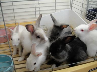 ミニウサギ 201204