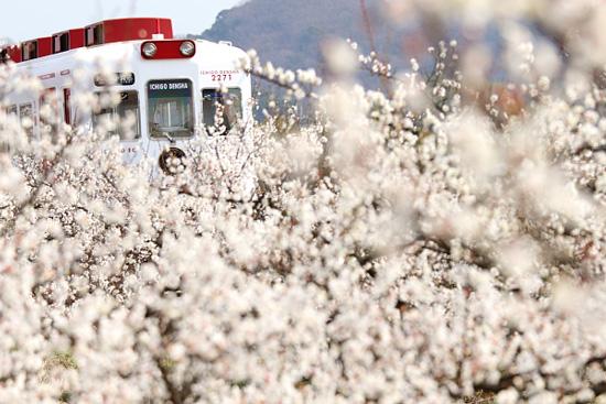 2012/3/11 和歌山電鐵貴志川線 伊太祈曽~山東
