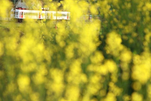 2011/4/17 和歌山電鐵貴志川線 西山口
