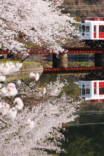 2009/4/6 和歌山電鐵貴志川線 大池遊園
