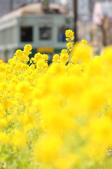 2012/4/1 阪堺電軌阪堺線 綾ノ町~神明町