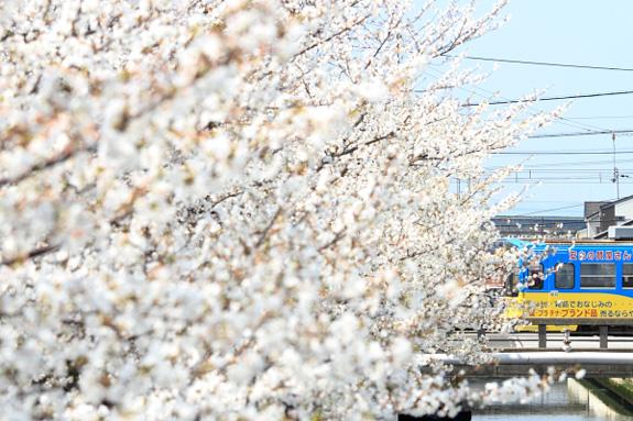 2012/4/8 阪堺電軌阪堺線 御陵前