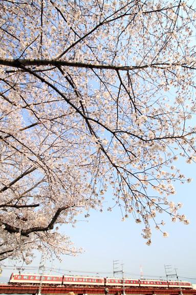 2012/4/8 近鉄南大阪線 矢田~河内天美