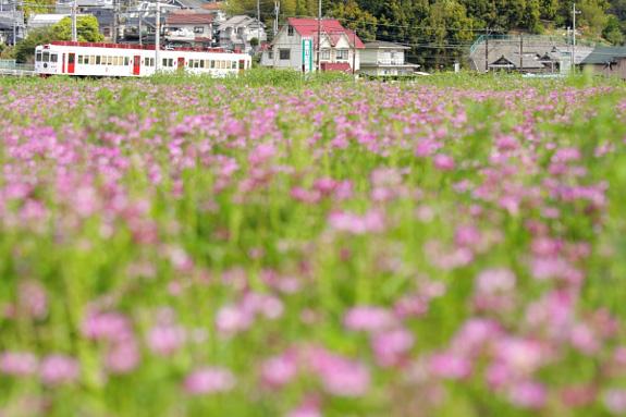 2012/4/21 和歌山電鐵貴志川線 大池遊園~西山口
