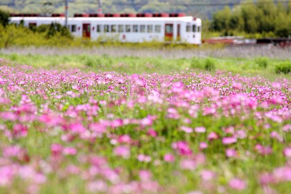 2012/4/21 和歌山電鐵貴志川線 伊太祈曽~山東