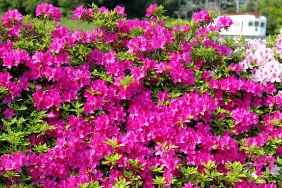 2012/5/5 和歌山電鐵貴志川線 大池遊園~西山口