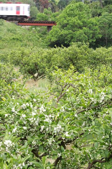 2012/5/12 和歌山電鐵貴志川線 山東~大池遊園