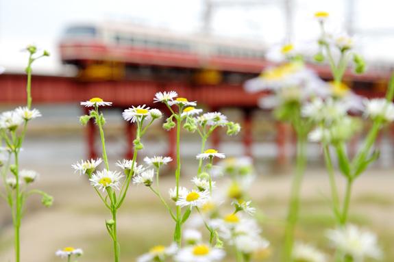 2012/6/9 南海電鉄高野線 我孫子前~浅香山