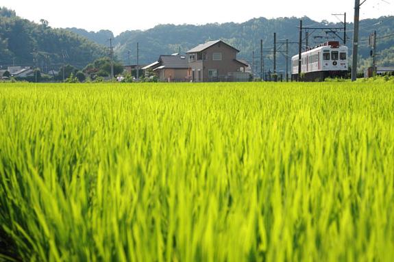 2008/7/19 和歌山電鐵貴志川線 伊太祈曽